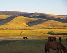 mongolie-blog